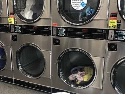 Cairnlea-Laundry-Blue-Hippo